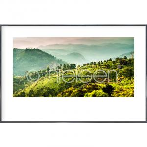 "Immagine incorniciata ""Landscape of Tea Plantations"" con cornice in alluminio Alpha"