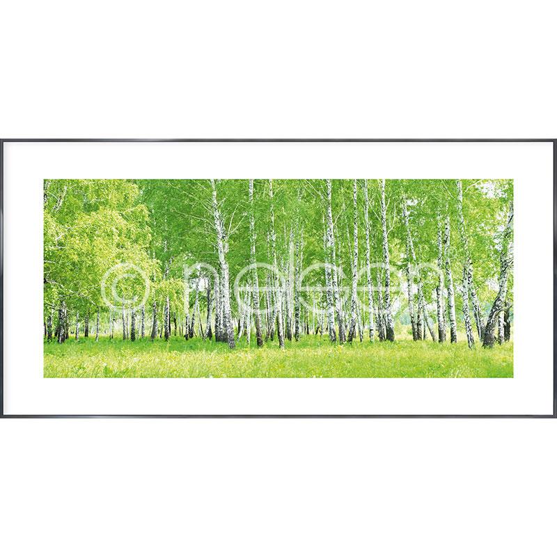 """Immagine incorniciata """"Birch Forest"""" con cornice in alluminio Alpha"""