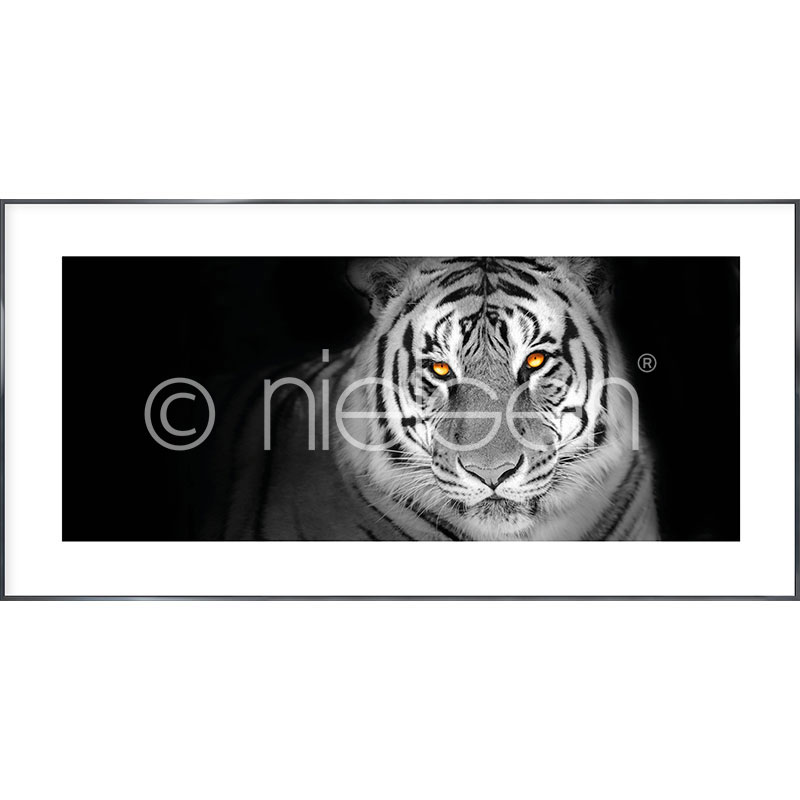"""Immagine incorniciata """"Tiger"""" con cornice in alluminio Alpha"""