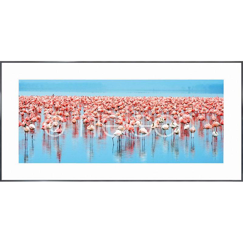 """Immagine incorniciata """"Flamingos"""" con cornice in alluminio Alpha"""