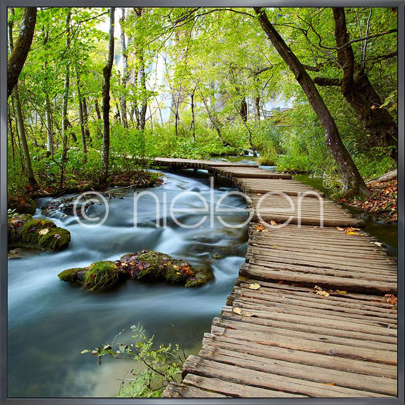 """Immagine incorniciata """"Footprint Forest"""" con cornice in alluminio Alpha"""