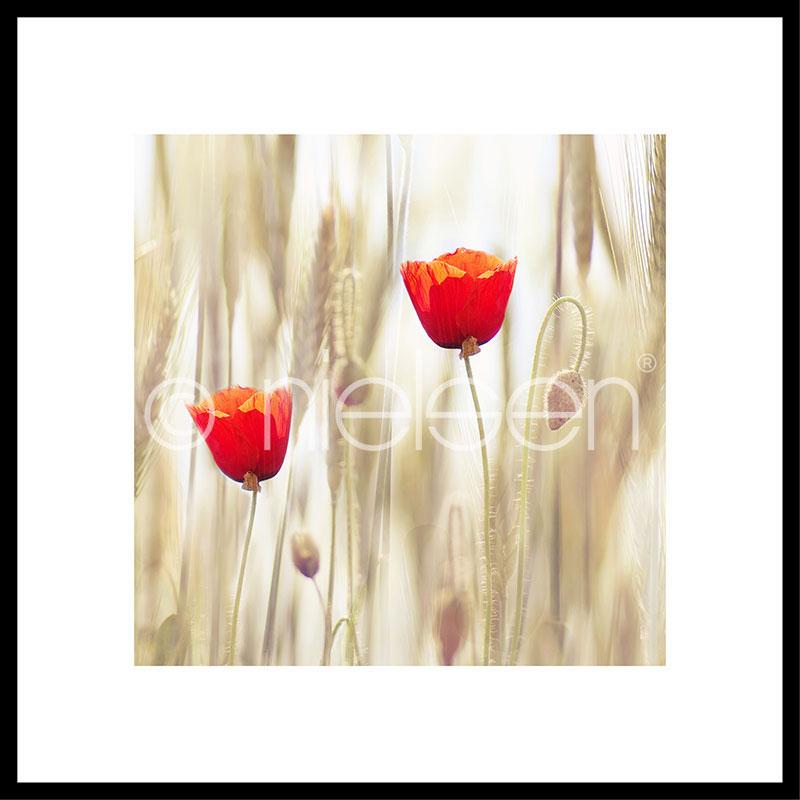 """Immagine incorniciata """"Flower Cornfield"""" con cornice in alluminio C2"""