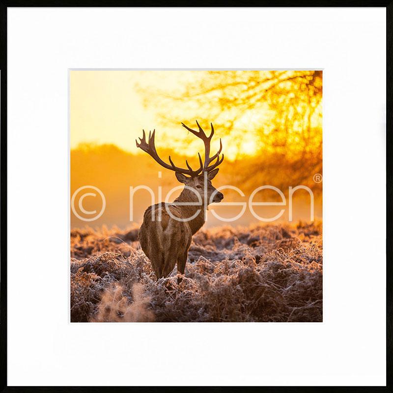 """Immagine incorniciata """"Cervine Sunset"""" con cornice in alluminio C2"""