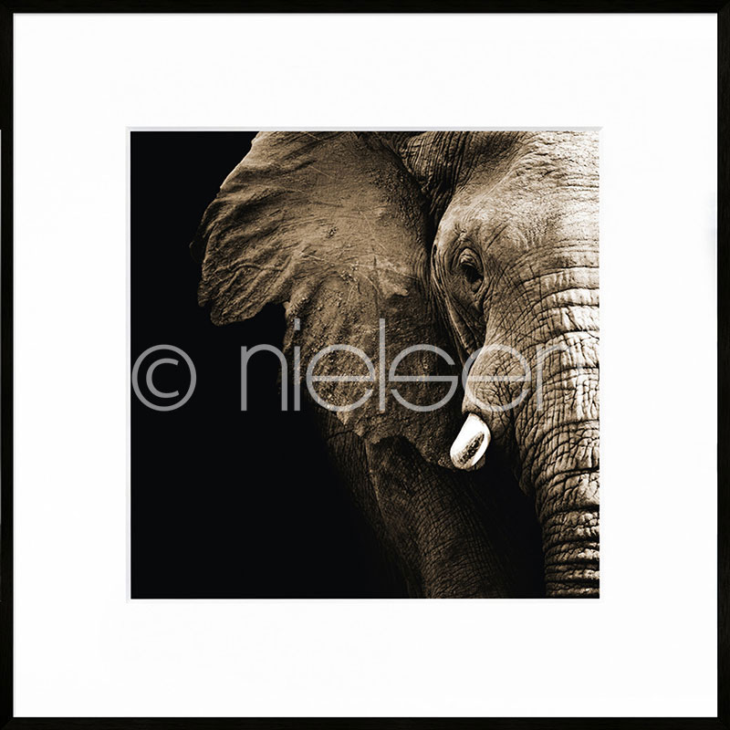"""Immagine incorniciata """"Elephant"""" con cornice in alluminio C2"""