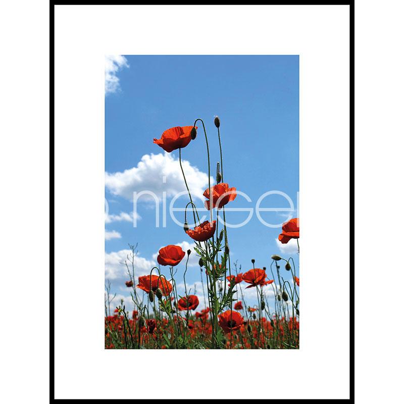 """Immagine incorniciata """"Field of Poppy Flowers"""" con cornice in alluminio C2"""