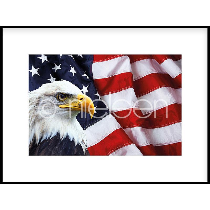 """Immagine incorniciata """"Eagle USA"""" con cornice in alluminio C2"""