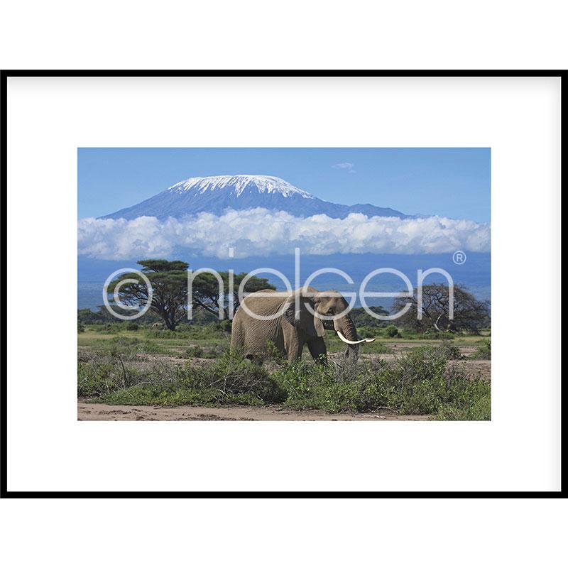 """Immagine incorniciata """"Elephant Prairie"""" con cornice in alluminio C2"""