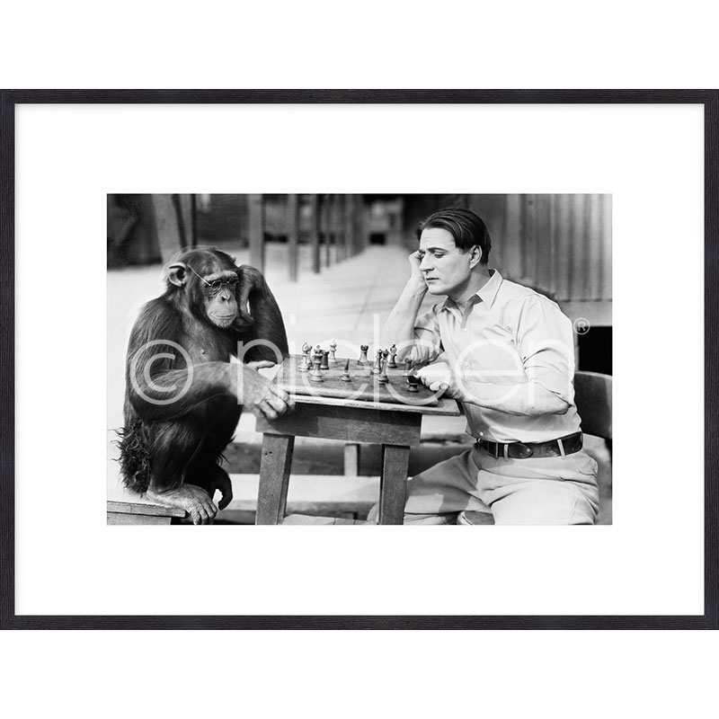 """Immagine incorniciata """"Monkey chess"""" con cornice in legno Quadrum"""