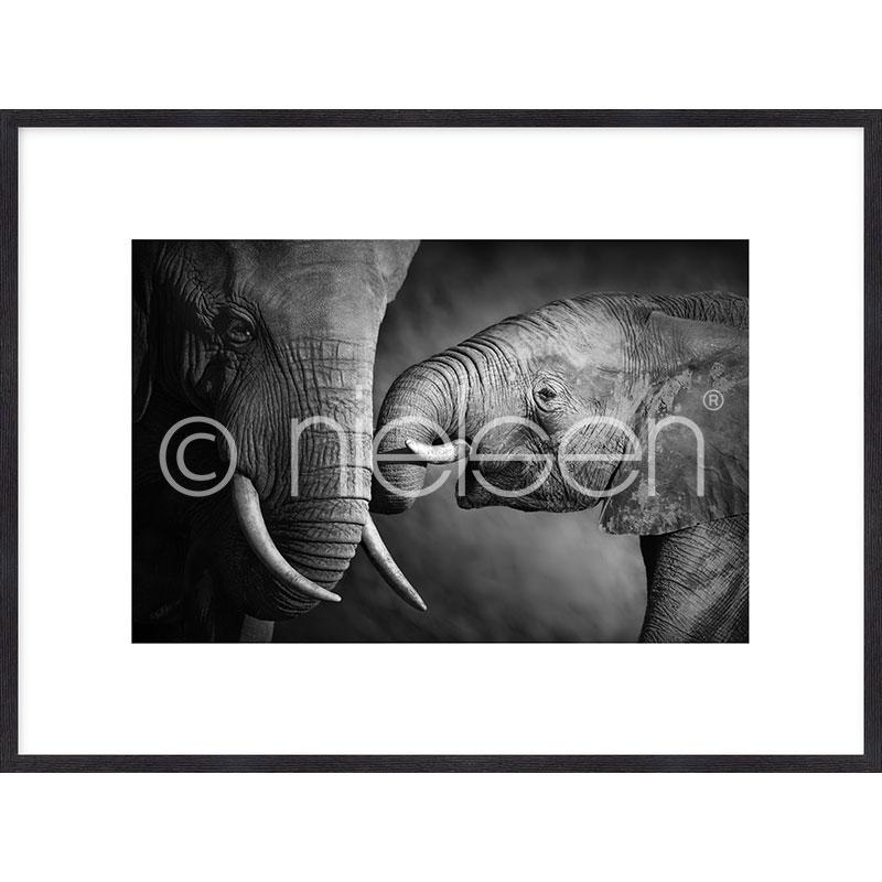 """Immagine incorniciata """"Elephant Baby"""" con cornice in legno Quadrum"""