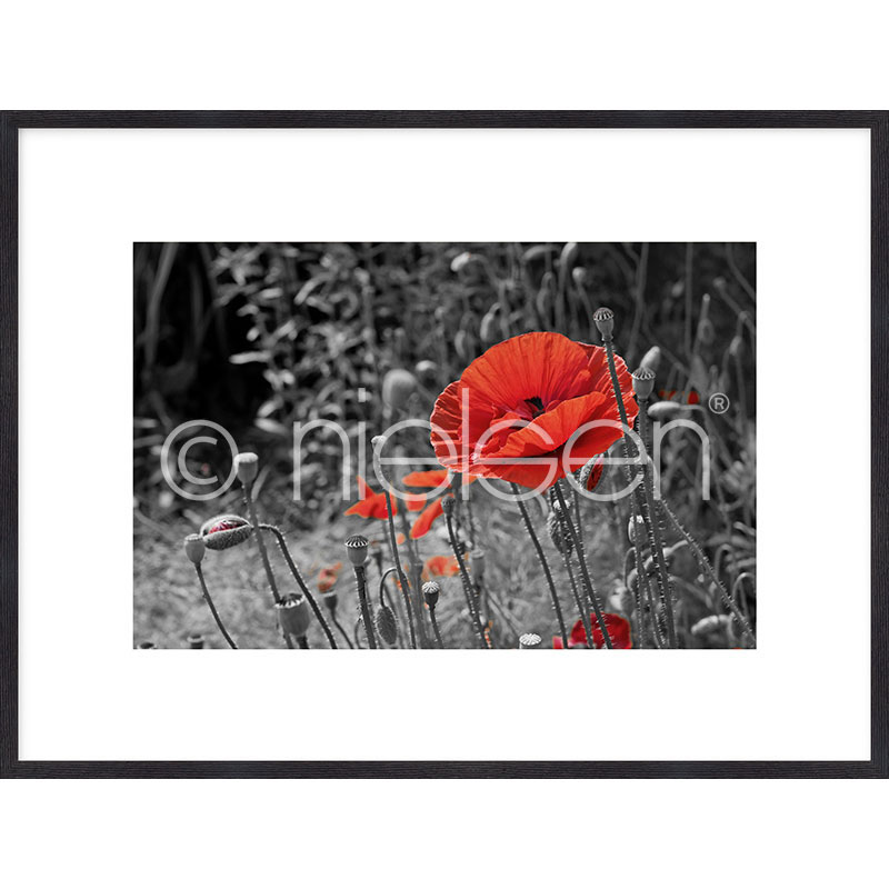 """Immagine incorniciata """"Red Poppy Flower"""" con cornice in legno Quadrum"""