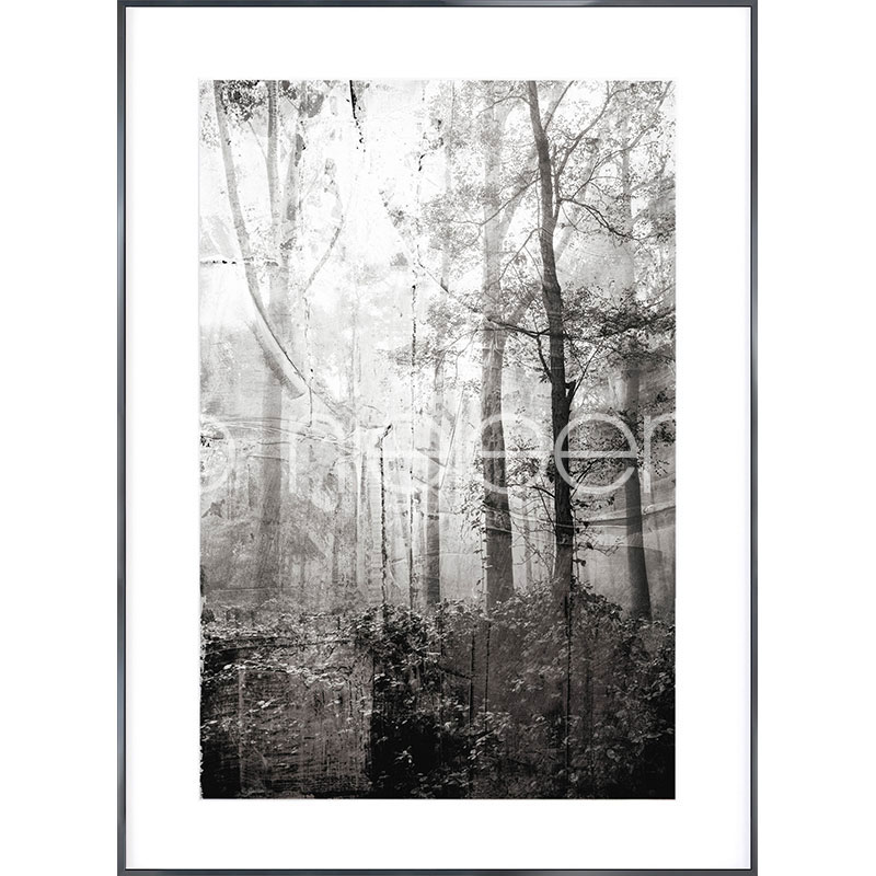 "Immagine incorniciata ""Forest Black and White"" con cornice in alluminio Alpha"