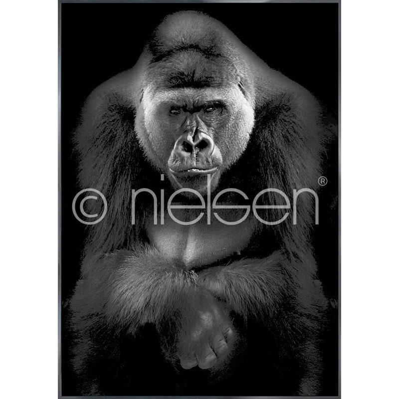 """Immagine incorniciata """"Gorilla"""" con cornice in alluminio Alpha"""