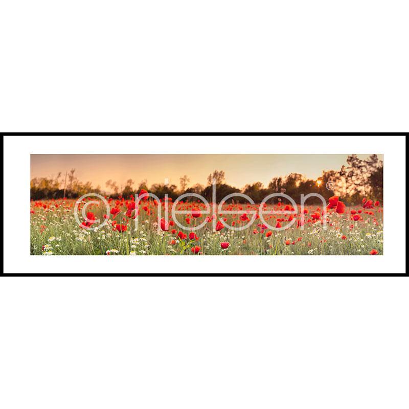 """Immagine incorniciata """"Poppy Flower Field"""" con cornice in alluminio C2"""