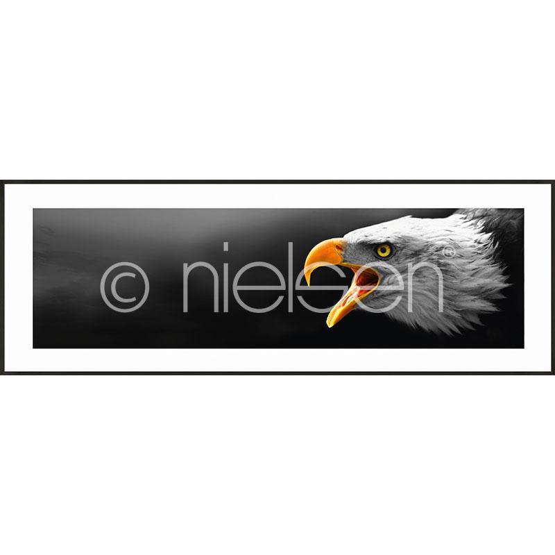 """Immagine incorniciata """"Eagle"""" con cornice in alluminio C2"""